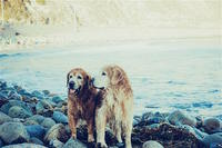 animals-dogs-lake-4933.jpg