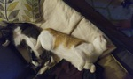 chicken4 Avatar