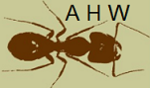 Black Ant Avatar