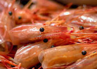 shrimps 01.jpg