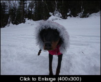 Lunas new coat 2011.jpg