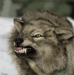 SabertoothWolF Avatar