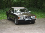Brown Cortina Avatar
