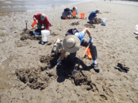 Clam Clinic 0815 0041.gif