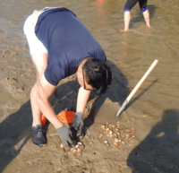 Clam Clinic 0802 0034.gif