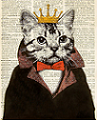 kingkitty Avatar