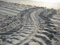 leatherback crawl.JPG