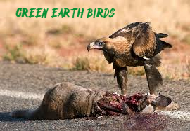 GreenEarthBirds