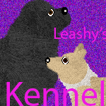 leashykitty Avatar