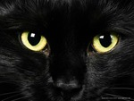 Black Cat Avatar