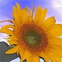 sunflower64 Avatar