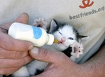 kittensaver Avatar