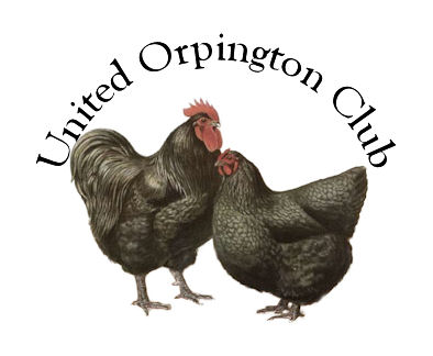 United Orpington Club Forum