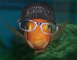 MC Blowfish Avatar