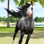 Exquisite Arabians Avatar