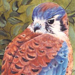 kestrel1 Avatar