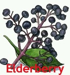 elderberry Avatar