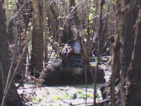 Bigfoot Tampa Bay.jpg