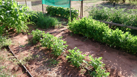 general garden with bean shade - Copy.jpg
