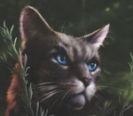 Ashfur's Biggest Stan Avatar