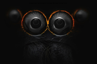 eyes_of_a_jumping_spider.jpg