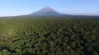 Aokigahara-and-Mount-Fuji1-1200x674.jpg
