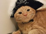 piratecat Avatar