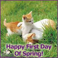 Happy Spring Cats.jpg