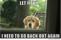 Dog let me in.png